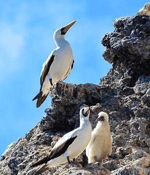 https://www.metrojourneys.com/wp-content/uploads/2018/08/galapagos-bird-species.jpg