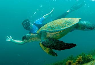Snorkeling with a Galapagos Green Marine Iguana