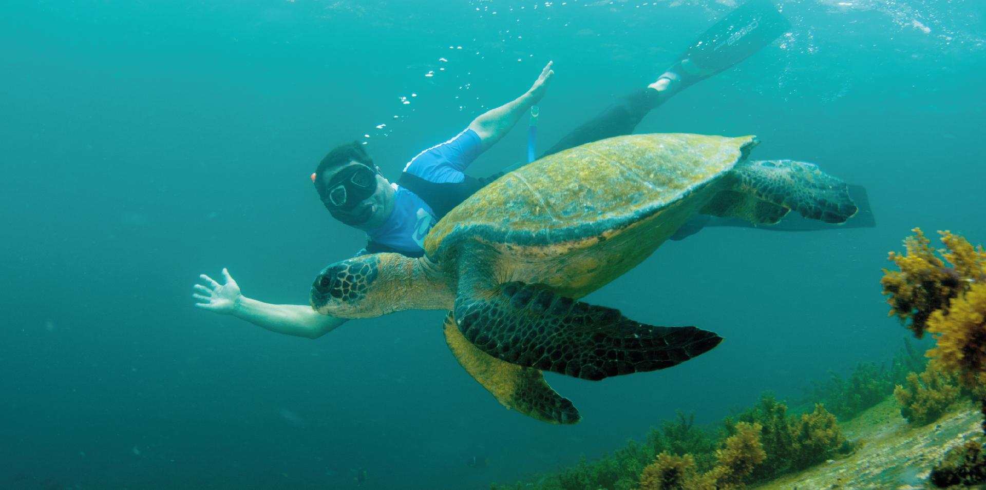 Practicando snorkeling con una tortuga marina de Galápagos