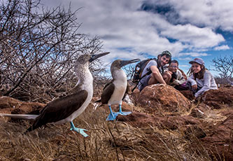 Blue-footed boobies and guests in the Galapagos