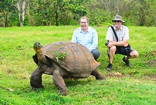 Giant tortoise in northern Santa Cruz