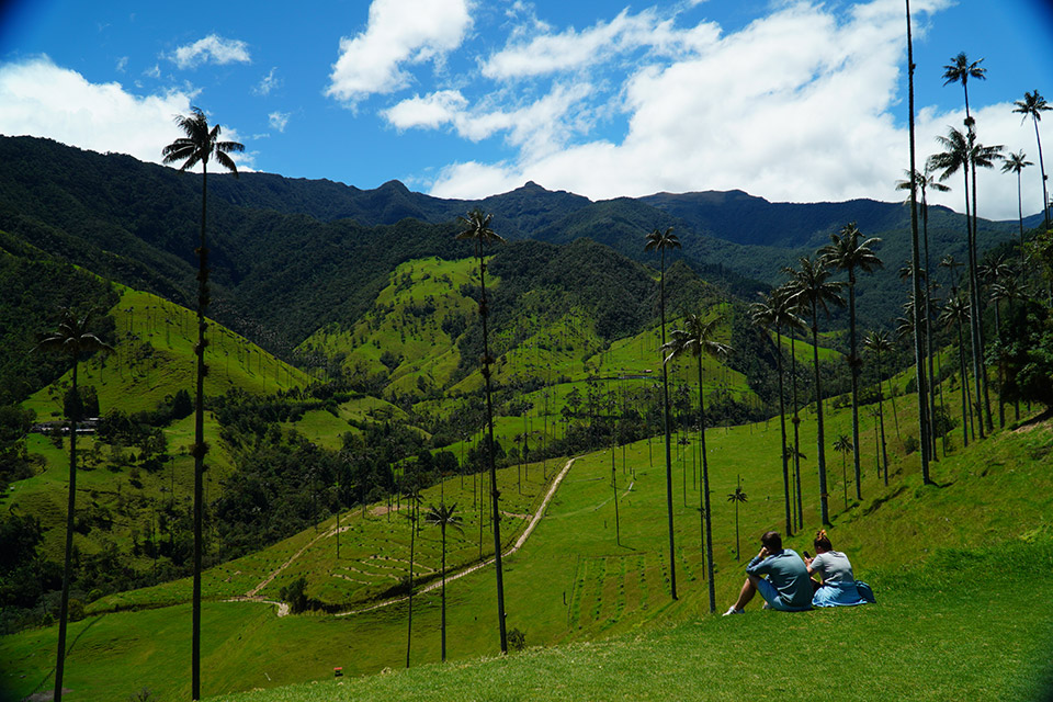 Cocora Valley in Pereira, Colombia
