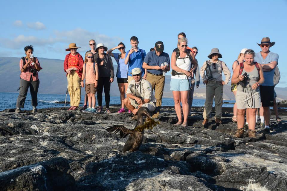Guests encountering a flightless cormorant while exploring Galapagos