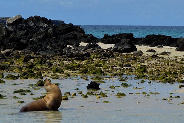 Genovesa Island can be explored aboard a Galapagos cruise.