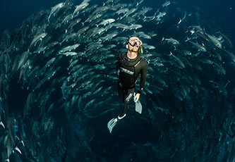 Diving in the Galapagos Islands