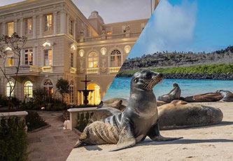 Hotel Boutique Casa Gangotena y un lobo marino de Galápagos