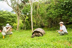 Island 2 Island Hopping: tortoise reserve