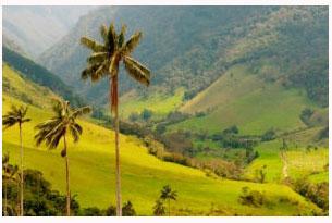 Valle de Cocora en Colombia