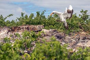 Darwin Bay en la isla Genovesa