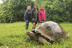 Giant tortoises on Santa Cruz Island up in the Highlands