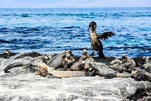 Vacaciones familiares en Galápagos: Punta Vicente Roca