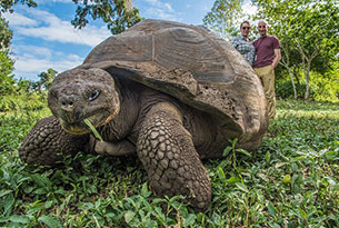 Giant Tortoise in Santa Cruz Island
