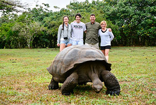 Giant Tortoises in the Highlands of Santa Cruz in the Galapagos