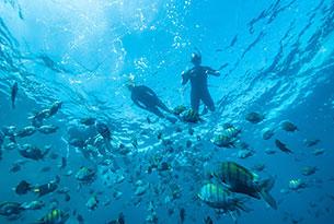 Snorkeling at Gardner Bay