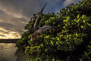 Viaje en solitario: Bahía Darwin