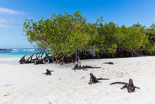 Tortuga Bay in the Galapagos Islands