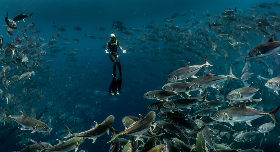 Deep diving in the Galapagos