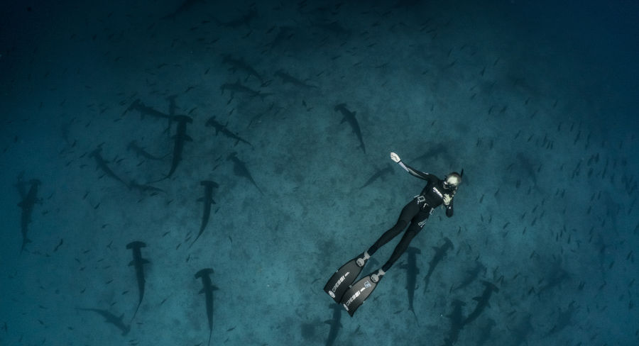 SCUBA diving with hammerhead sharks in the Galapagos Islands