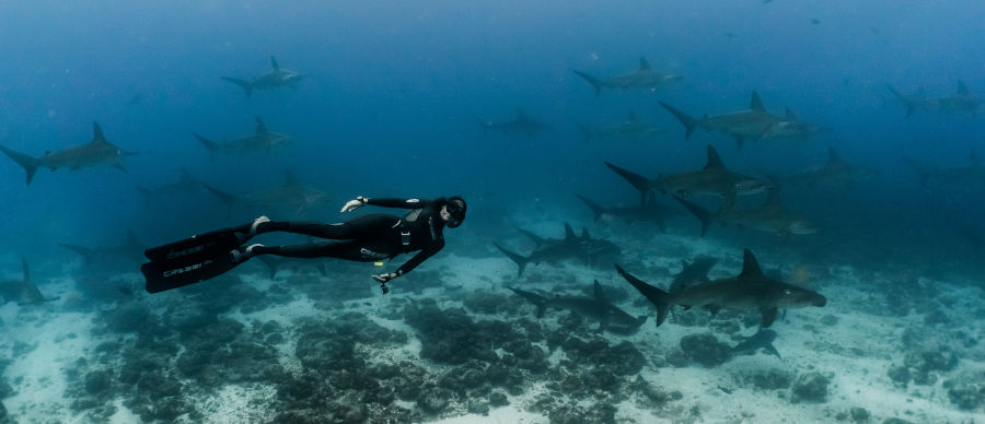 Drift diving with whitetip reef sharks in the Galapagos