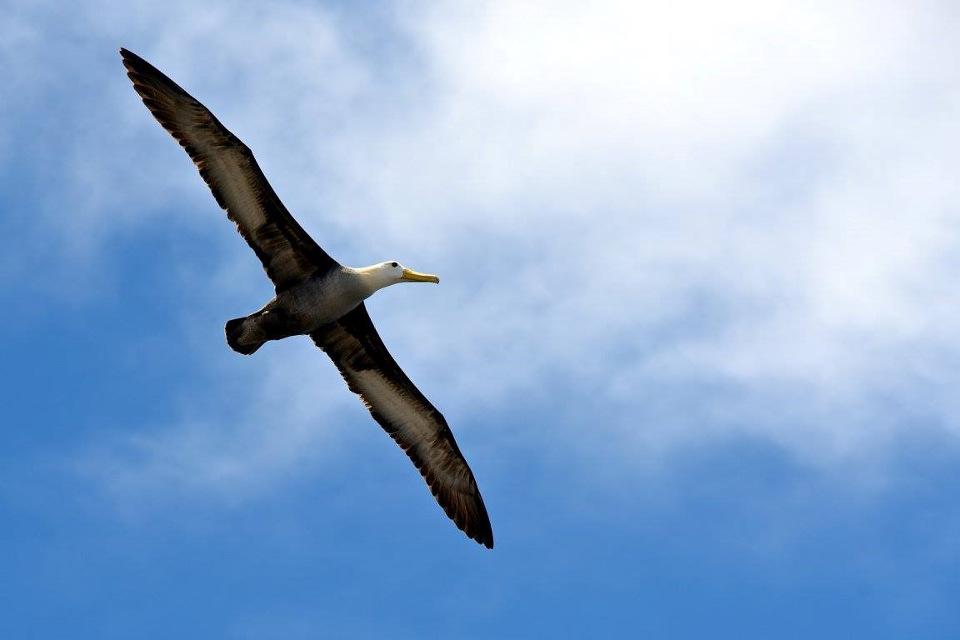 cuanto tiempo debe durar mi viaje a galápagos: albatros