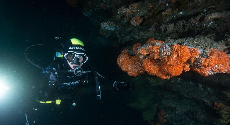 SCUBA Diving in the Galapagos archipelago