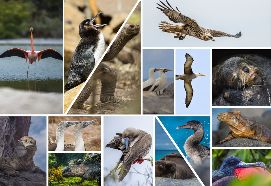 The 15 most iconic species in the Galapagos