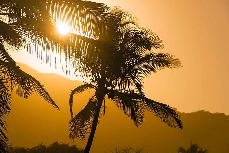 Palm tree silhouettes in Colombia