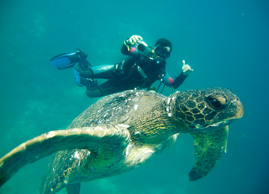SCUBA diving with a sea turtle in the Galapagos Islands
