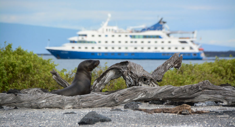 Expedition vessel in the Galapagos with a sea lion in the foreground
