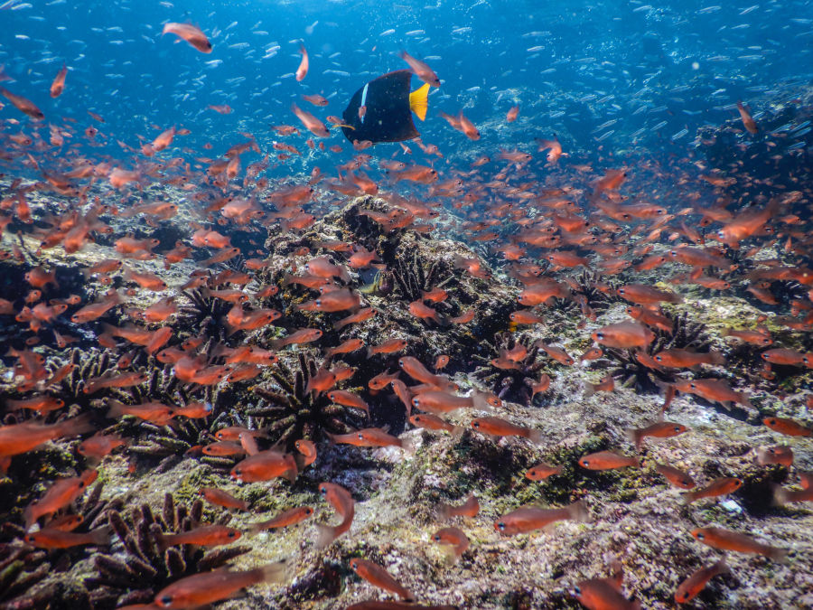 Reef in the Galapagos Islands