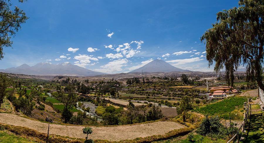 Vineyards in Arequipa, Peru