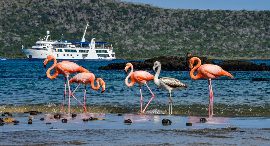 Expedition Vessel at a visitor site with flamingos at Isabela, Galapagos