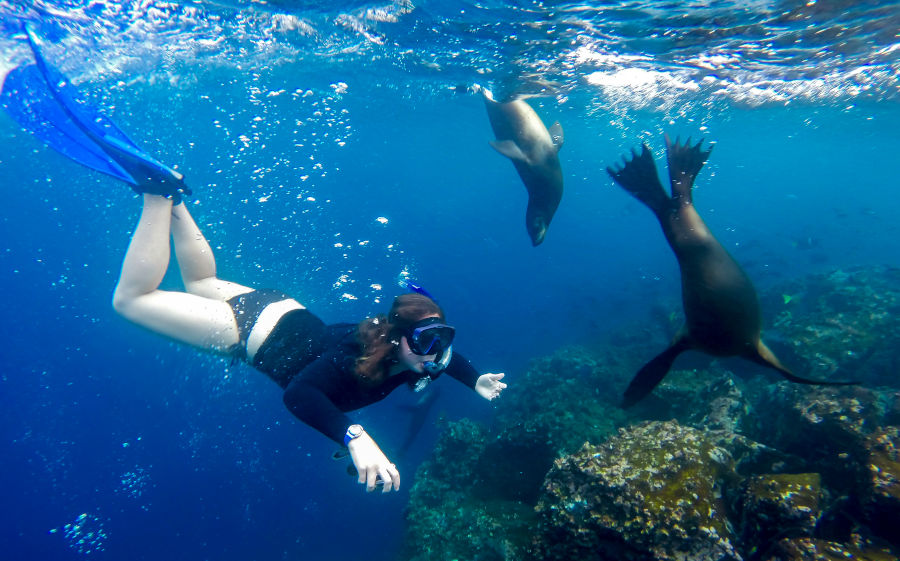 Snorkeling next to some friendly sea lions in the Galapagos waters