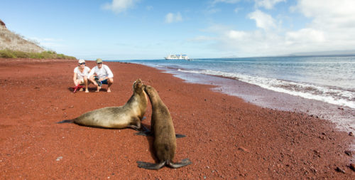 Couple visiting sealions on a beach in the Galapagos