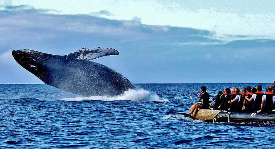 Observación de ballenas en las Galápagos