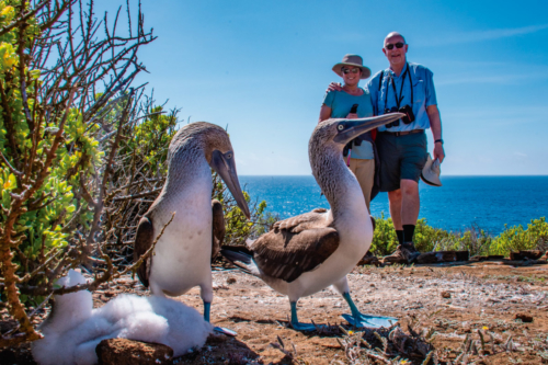 Blue-footed boobies found in the Galapagos Islands.