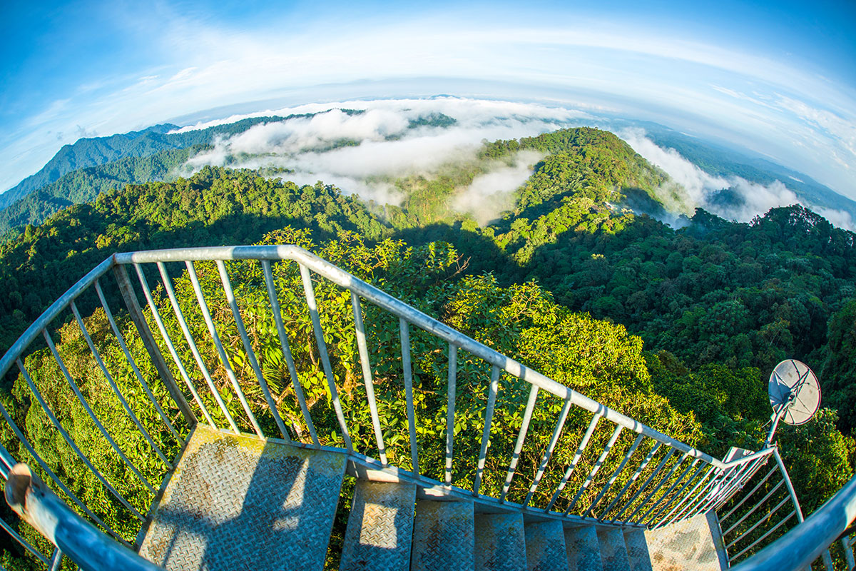 View from the Observation Tower at Mashpi Lodge. Top Nature lovers south america