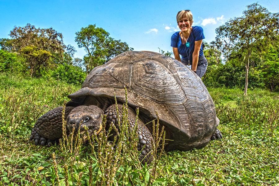 A Galapagos Giant Tortoise in Santa Cruz Island's highlands, Galapagos