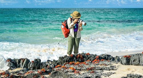 Ecuador and Galapagos deal for Solo Traveler