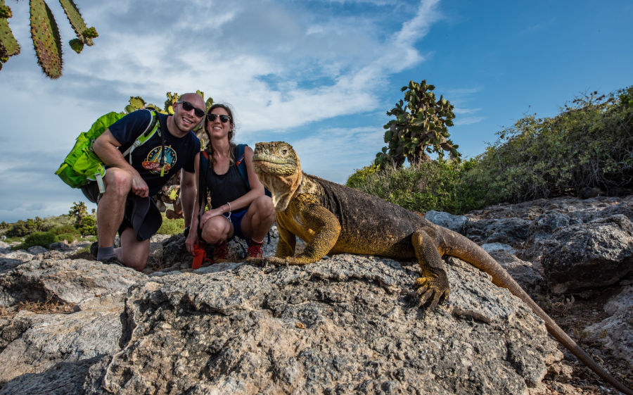 Couple poses next to an iguana in the Galapagos