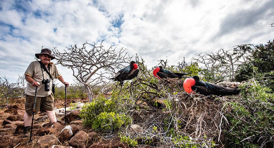 Senior traveler posing next to a Magnificent Frigatebird in Galapagos