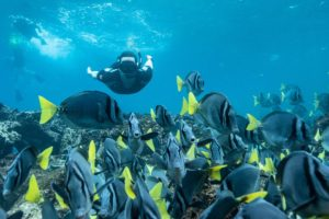Snorkeling with a school of fish in Galapagos