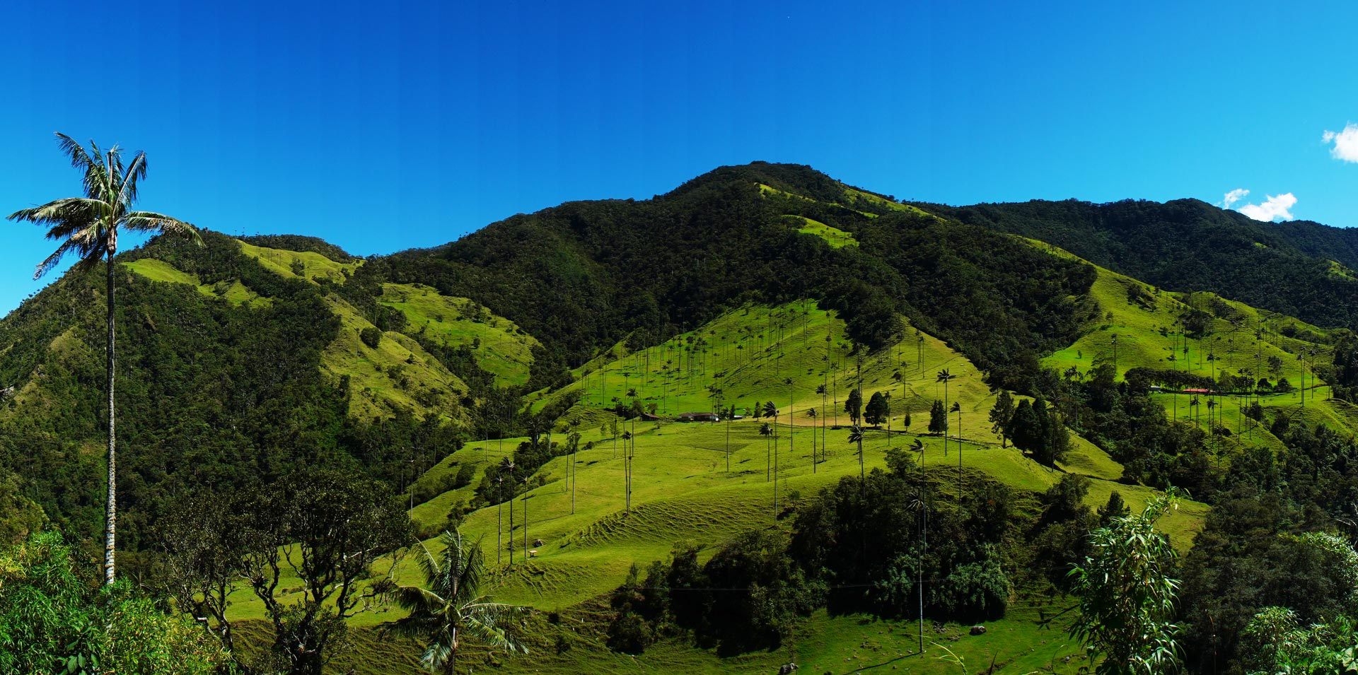 Cocora Valley Panoramic View in Colombia