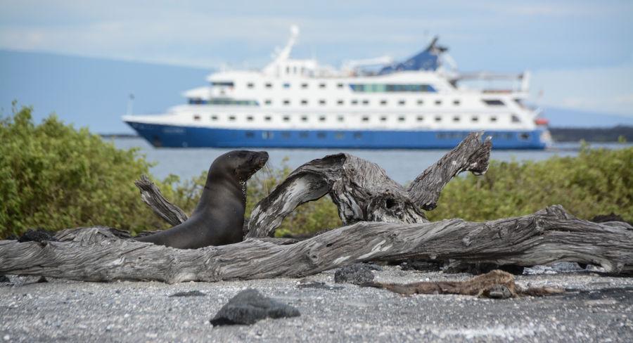 Sea lion with Santa Cruz II Cruise in the background