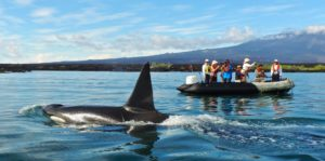 Whale watching on a panga ride in the Galapagos Islands