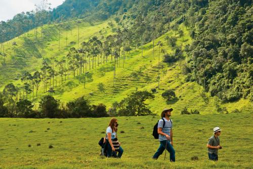 Coffee triangle region in Colombia
