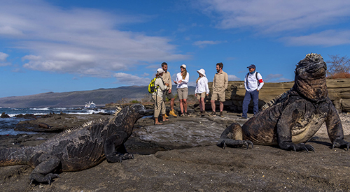 Marine iguana in Puerto Egas, Galapagos Islands