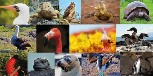 Big15: A list of Galapagos' most iconic species