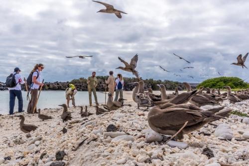 Darwin Bay, Genovesa Island