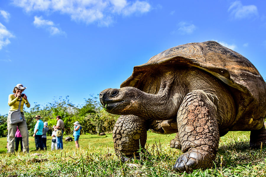 Galapagos Giant Tortoise in Santa Cruz Island